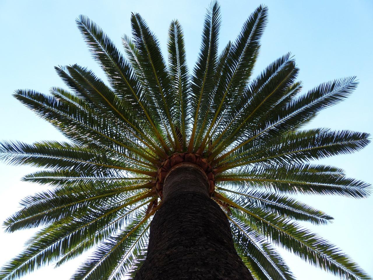 palm-187045_1280