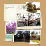 cart monastero alberi