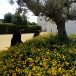 fiori fuori chiesa e monache